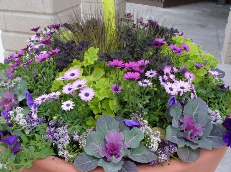 171 Best Images About Container Gardening On Pinterest Container
