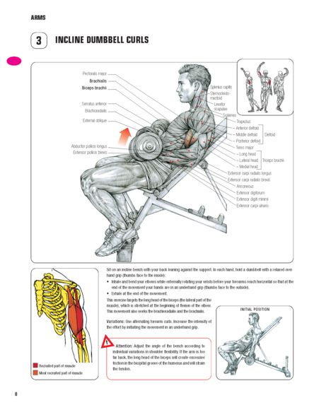 1000+ images about Frederic Delavier/Strength Training