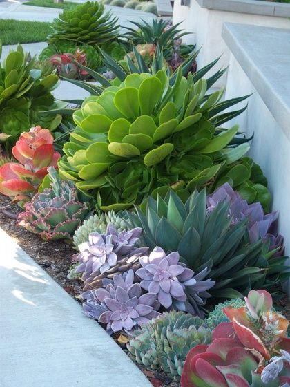 Low maintenance, no fuss. When it comes to gardening, the less work it takes to maintain, the better. Succulent gardens were
