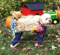 153 Best images about Pet Halloween Costumes on Pinterest ...