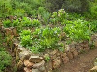 Vegetable garden - raised bed with stacked rock wall ...