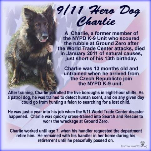 9/11 dogs, hero, Charlie, dogs of 9/11