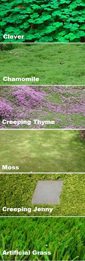 17 Best images about Ground Cover Ideas on Pinterest  Gardens Drought tolerant and Walkways