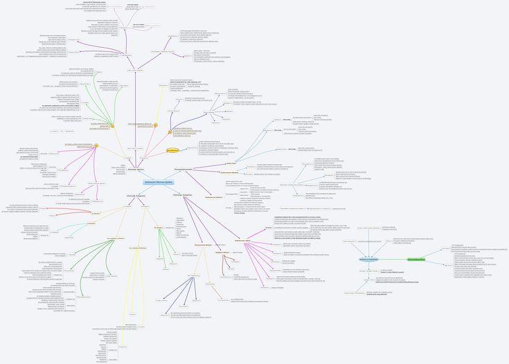 25+ Best Ideas about Autonomic Nervous System on Pinterest
