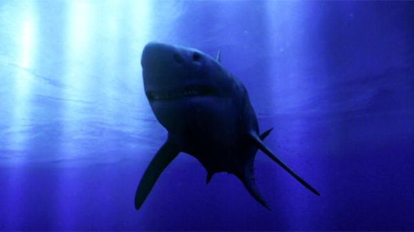 The 25 Best Megalodon Attack Ideas On Pinterest Is - MVlC