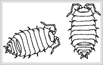52 best Insekten Kleurplaten images on Pinterest