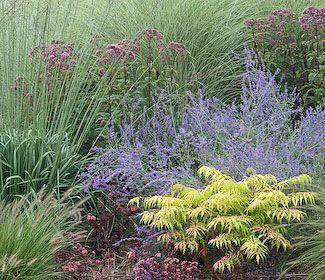 garden shrub sumac tiger