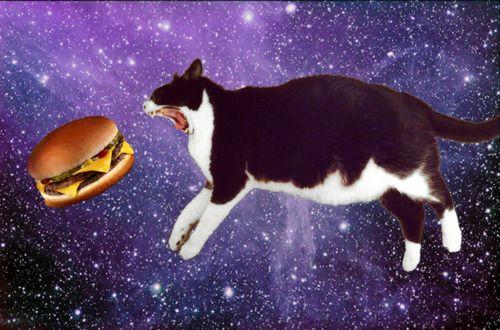 Cute Hamburger Wallpaper Cheeseburger Chow Down Cat Space Cats Pinterest Cats
