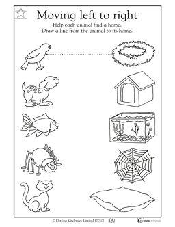 25+ best ideas about Pet theme preschool on Pinterest