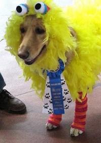 Big BirdDog Won First Prize in the Costume Contest ...