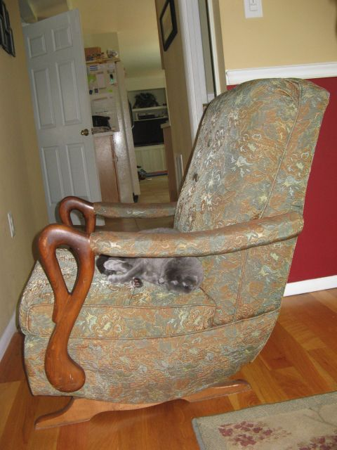 reupholstering a chair wicker chairs uk goose neck rocking | ... antiques): tennessee gooseneck rocker?, mahogany color, tulip