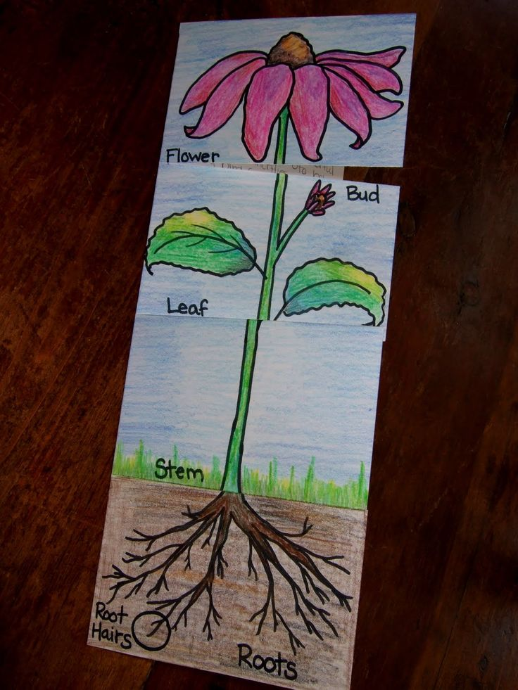 Cut And Paste Plant Worksheets