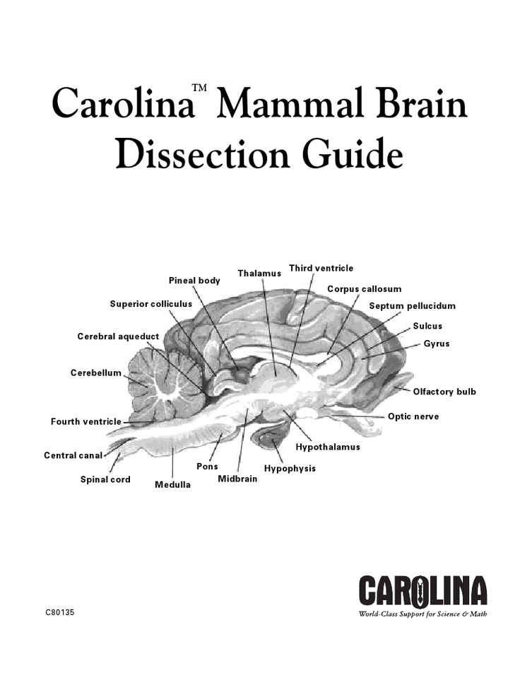 19 best images about Dissection Guides on Pinterest