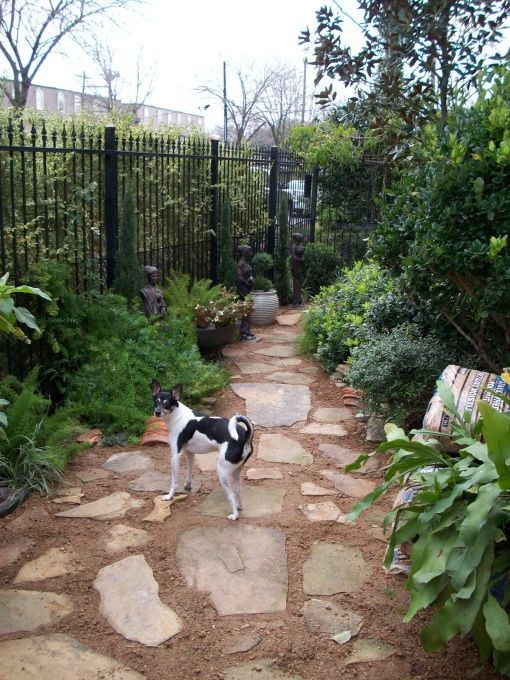 dog friendly backyard