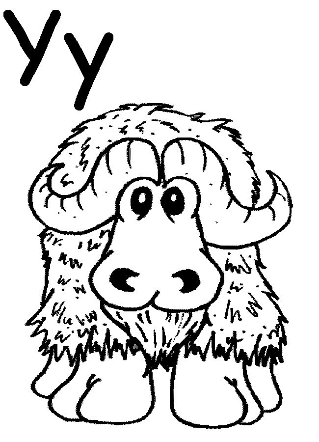 17 Best images about Yaks/Highland Cattle ;) on Pinterest