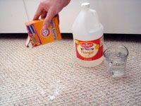 Best 25+ Pee stains ideas on Pinterest | Pet urine cleaner ...