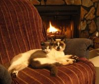1000+ images about Toasty Cats By The Fireside on ...