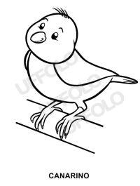 disegni immagini da stampare e colorare - Uccelli e ...