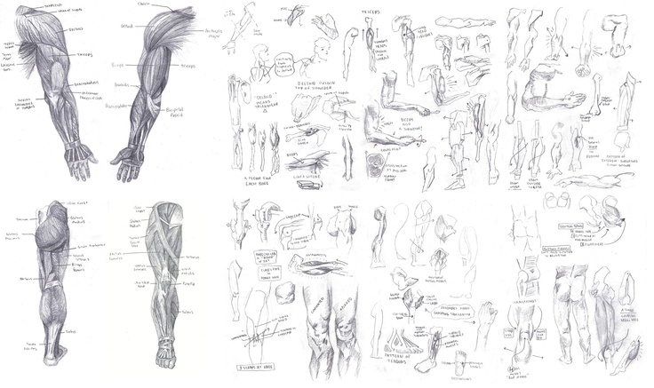 Arm/Leg study from
