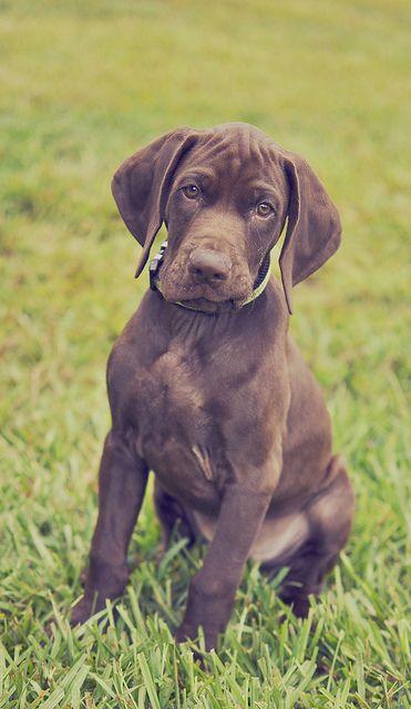 27 Best Images About Dog Breeds Board On Pinterest
