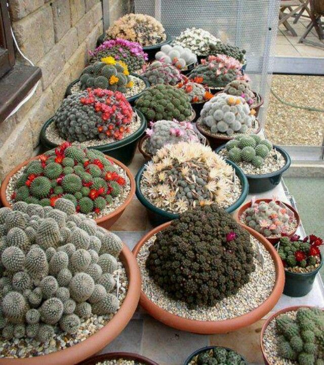 1273 Best Images About Cactus Y Suculentas On Pinterest Agaves