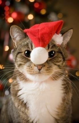 1000 Images About Happy Holidays For Animals On Pinterest