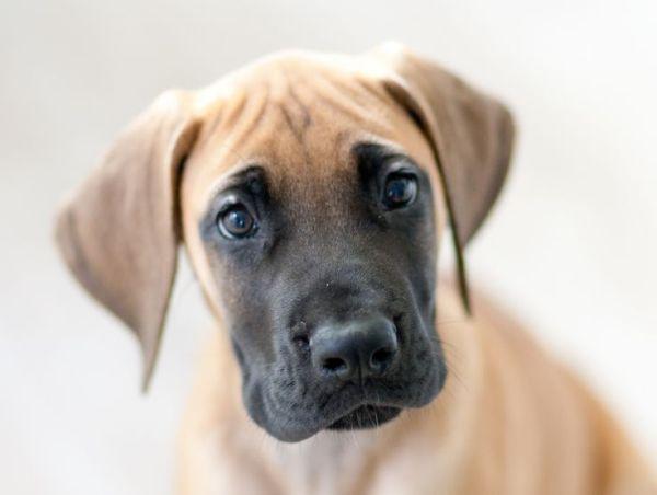 85 best images about Cute stuff on Pinterest Boxer