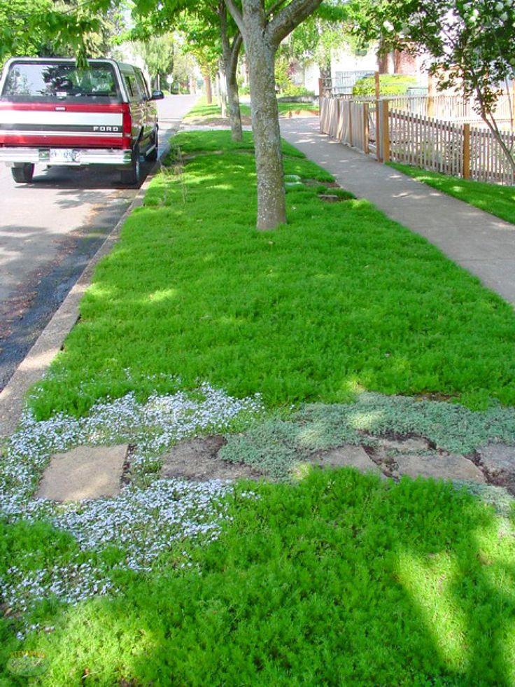 17 Best ideas about Lawn Alternative on Pinterest  Grass