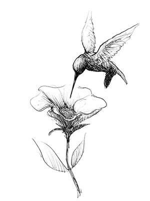 die besten 20 kolibri tattoo ideen