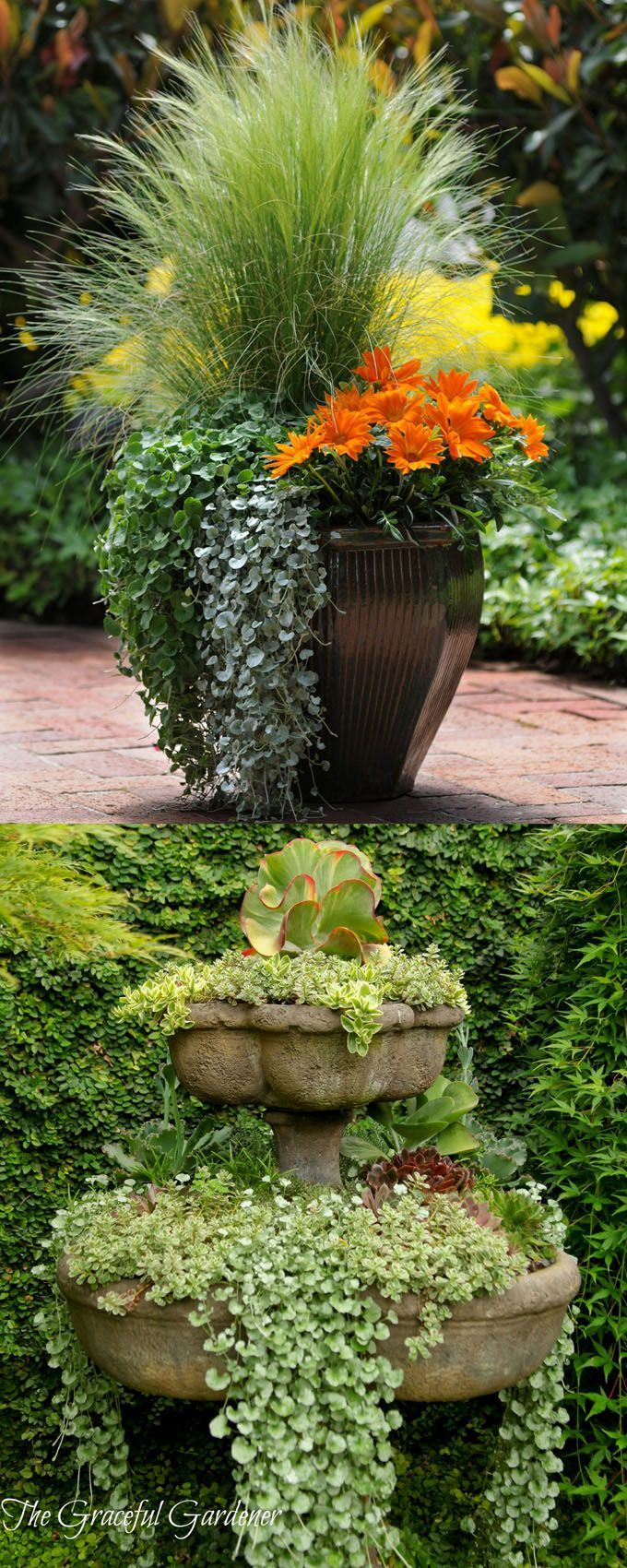 1531 Best Images About Container Gardening Ideas On Pinterest