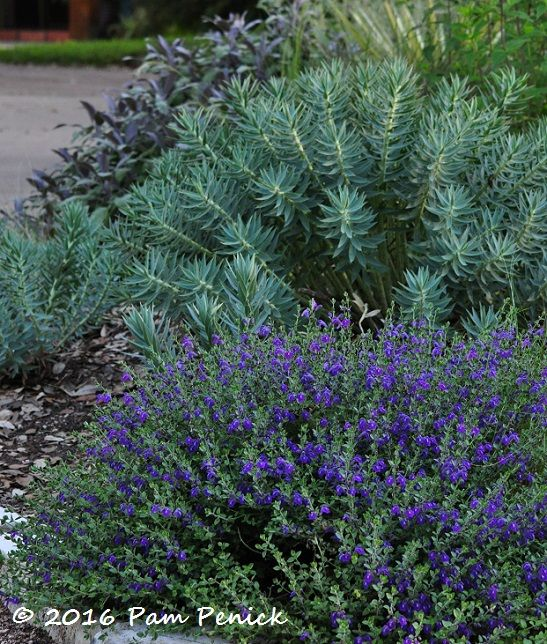 17 Best images about Garden Plant combinations on