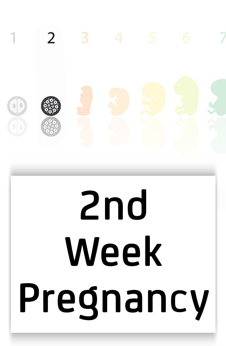 186 best images about Pregnancy Week By Week on Pinterest