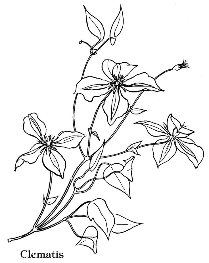 17 Best images about flowers coloring pages on Pinterest