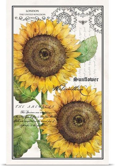botanical sunflower canvas