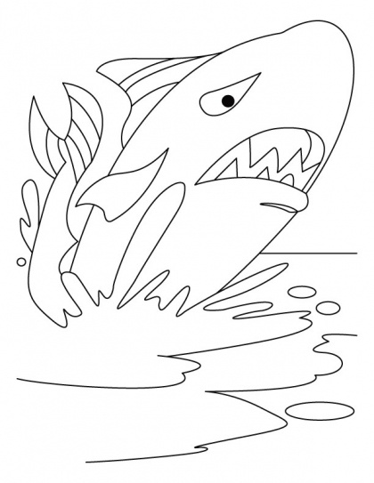 32 best images about Water Animals Coloring Pages on