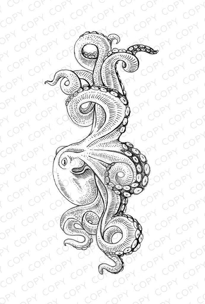 Octopus Sketch Drawing Illustration for Download #coloring