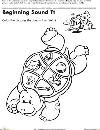 37 best images about Turtle Unit 6 on Pinterest
