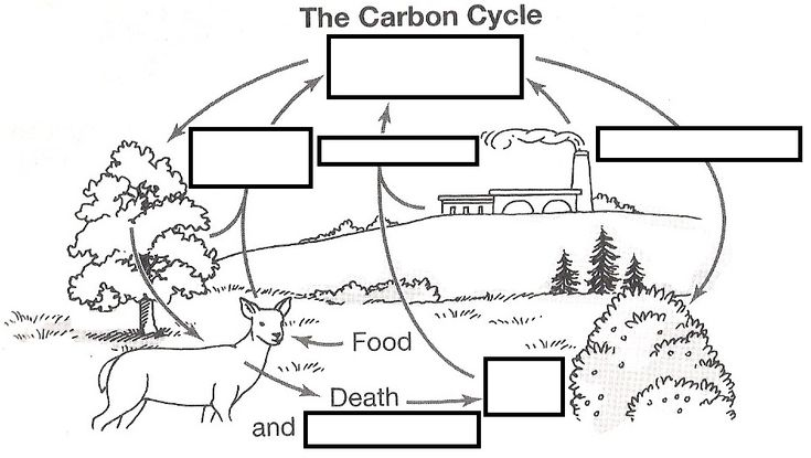 wizer.me free interactive carbon cycle, Biology, cycles