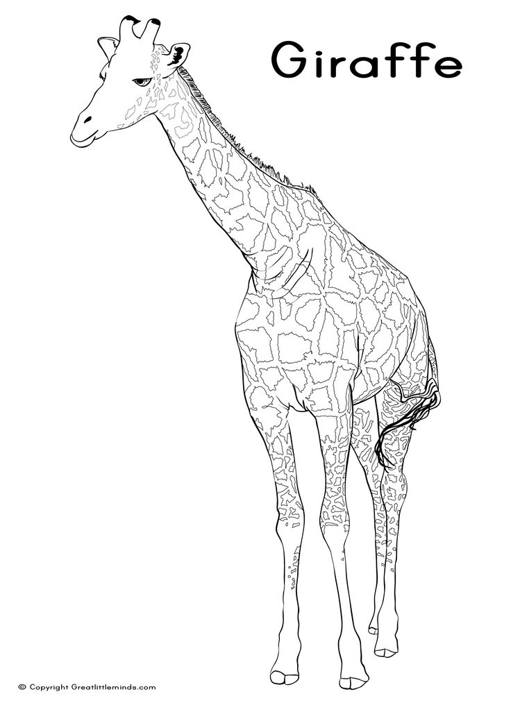 137 best images about animal coloring book on Pinterest