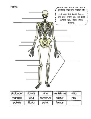 Skeleton Match Up Activity