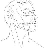 53 best Facial Anatomy images on Pinterest
