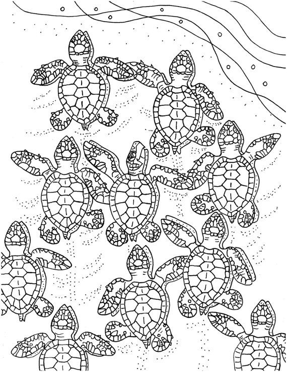 96 best images about Sea Turtle Stuff for C on Pinterest