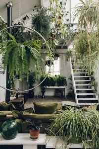25+ best Plant rooms ideas on Pinterest | Plants indoor ...