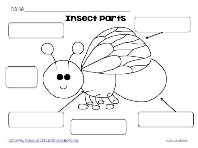 31 best images about Natuur lieveheersbeestje on Pinterest