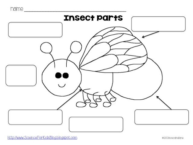 Here's a simple page for labeling the parts of an insect