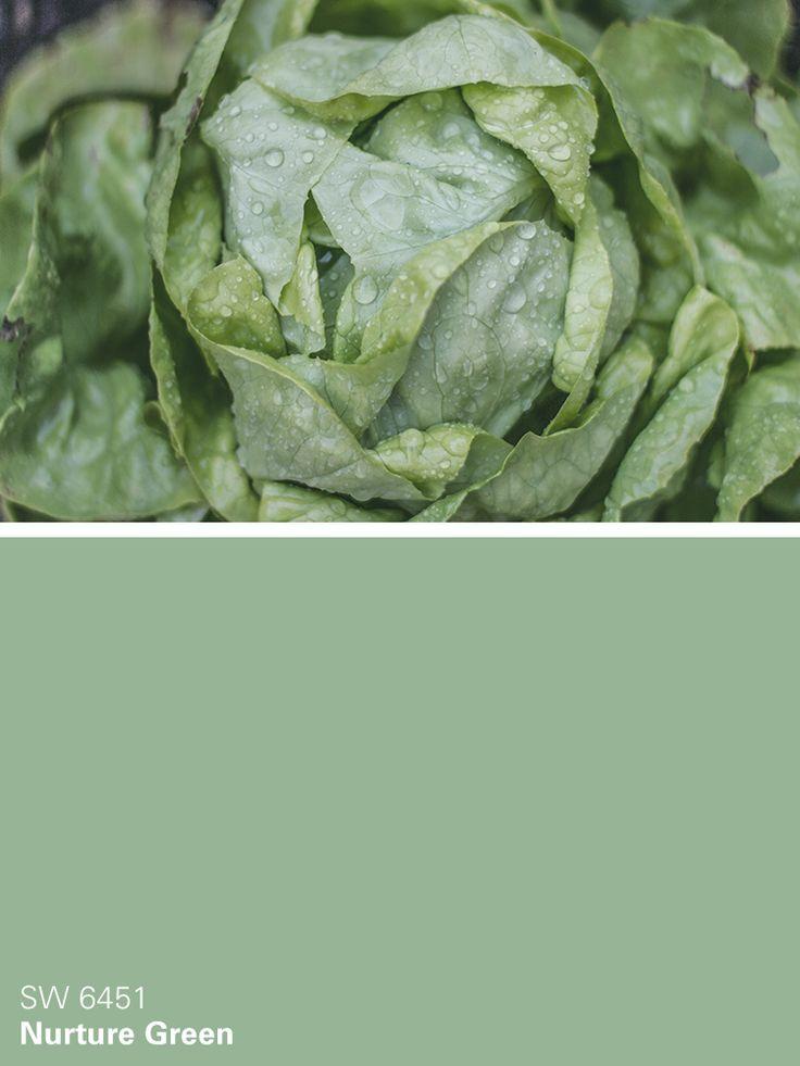 best kitchen paint sink prices sherwin-williams color – nurture green (sw 6451 ...