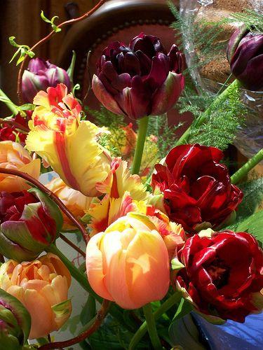 Tulpen Dehner