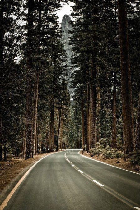 Road to Yosemite National Park / #photography #landscape #nature #yosemite #cali