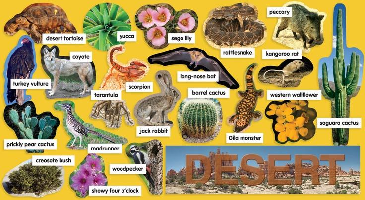 Desert plants animals mini bulletin board idea for