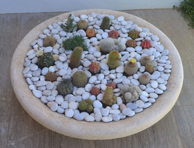 25 Best Ideas About Mini Cactus Garden On Pinterest Small